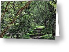 The Path We Walked Greeting Card