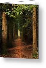 The Pathway Greeting Card