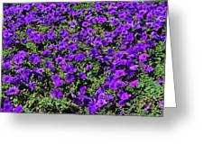 The Pathway To Purple Greeting Card