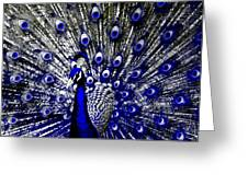 The Peacock Fan Greeting Card