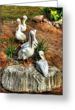 The Pelican Clan Greeting Card