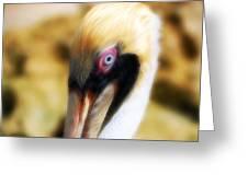 The Pelican Look Greeting Card