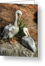 The Pelicans Greeting Card