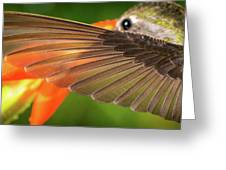 The Perfect Left Wing Of A Hummingbird Greeting Card