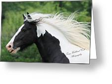 The Perfect Stallion  Greeting Card