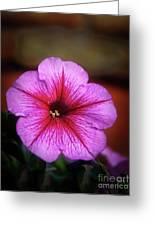 The Petunia Greeting Card