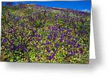 The Phacelia Patch Greeting Card