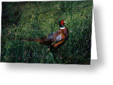 The Pheasant In The Autumn Colors Greeting Card