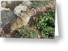 The Pica Greeting Card