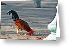 The Picking Rooster Greeting Card