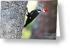 The Pileated Greeting Card