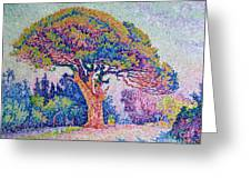 The Pine Tree At Saint Tropez Greeting Card by Paul Signac