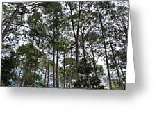 The Pines Of Tallahassee Greeting Card