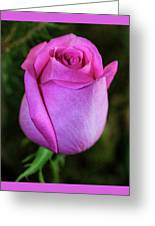 The Pink Rose Greeting Card