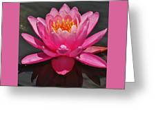 The Pink Water Lily Greeting Card