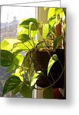 The Plant That Ate My Kitchen - Photograph Greeting Card