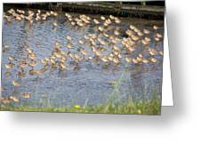 The Plovers Greeting Card