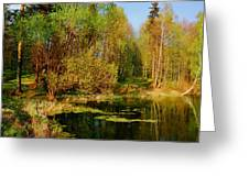 The Pond In The Spring Greeting Card