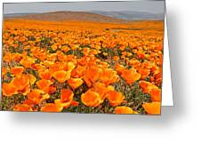 The Poppy Fields - Antelope Valley Greeting Card by Peter Tellone