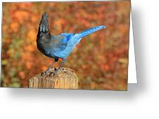 The Poser Greeting Card