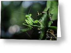 The Praying Mantis Greeting Card