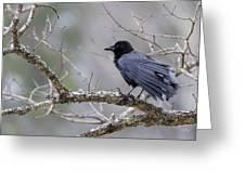 The Preening Crow Greeting Card