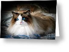 The Blue Eyed Princess  Greeting Card