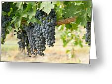 The Promise Of New Wine Greeting Card
