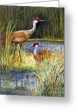 The Protector - Sandhill Cranes Greeting Card