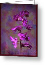 The Purple Orchid Greeting Card