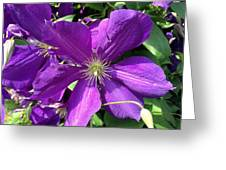The Purple Sunny Day  Greeting Card