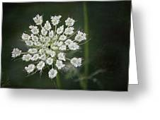 The Queens Lace Greeting Card