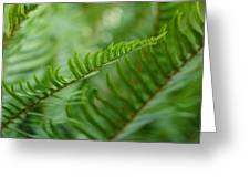 The Quiet Beauty Of Ferns Greeting Card