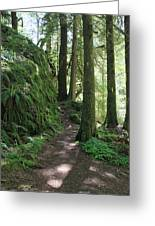 The Quiet Forest Greeting Card
