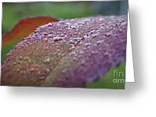 Rain Falls Lightly Greeting Card