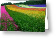 The Rainbow Of Flower At Hokkaido Greeting Card