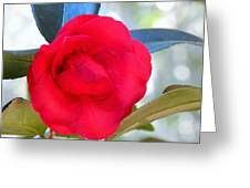 The Red Camellia Greeting Card