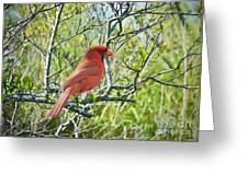 The Red Cardinal Greeting Card