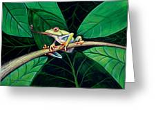 The Red Eyed Tree Frog Greeting Card