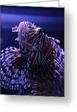 The Red Lionfish Greeting Card