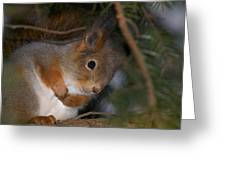 The Red Squirrel 4 Greeting Card