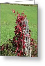 The Red Vine - Photograph Greeting Card