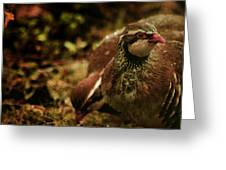 The Redlegged Partridges Greeting Card