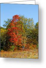 The Reds And Greens Of Autumn Greeting Card