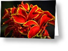 The Reds Of Winter Greeting Card