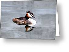 The Reflection Of A Grebe Greeting Card