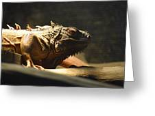 The Reptile World Greeting Card