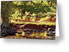 The River Lin , Bradgate Park Greeting Card