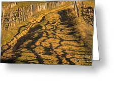 The Road To The Pasture Greeting Card