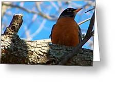 The Robin Greeting Card